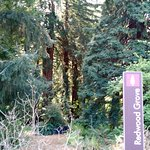 Redwood Grove section