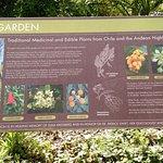 Info on Chilean Garden