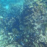 One of the large schools of fish we saw while snorkeling