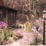 Romantic woods cabin with wildflowers