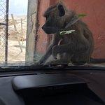 Foto de Africa Safari Park & Motel
