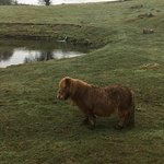 Photo de Ardgarry Farm