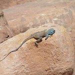 a lizard - Petra