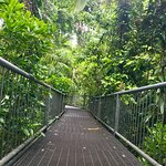 Daintree Discovery Centre Foto