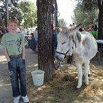 Petit âne dans la pinède de la Garoupe