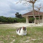 コンドイビーチの島ネコさん。人を警戒することもなくうとうと寝ています。