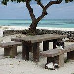 石垣ブルーの海をバックにコンドイビーチの島ネコさん。見えるだけで10数匹いました。