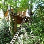 Cabane perchée au milieu des bois