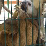 it's a hard life being a sloth!!!