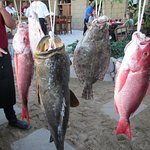 Choice of fresh fish catch of the day