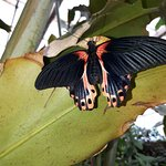 Photo de Butterfly Park of Benalmadena