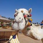 Desert Rose Resort Foto
