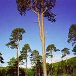 Glen Tanar National Nature Reserve