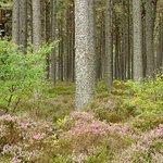 Loch Fleet National Nature Reserve
