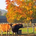 Fall foliage at theBillings Farm.