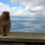 Photogenic monkey.