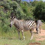 Foto de Legend Golf and Safari Resort