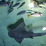 Foto di Sharjah Aquarium