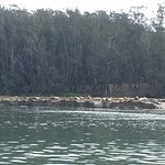 Lots of seals on the shore and in water. Many opportunities to see sea otters in the water.