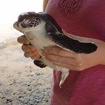 Adorable turtles!