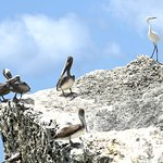 Washington-Slagbaai National Park white heron and pelicans