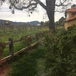 Foto di Napa Valley Lodge