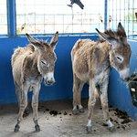 Donkey Sanctuary Bonaire Foto