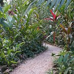 Trail to jungle bungalow
