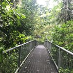 Daintree Discovery Centre.