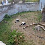 Foto de Copenhagen Zoo