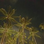 Photo of Coco Tam's