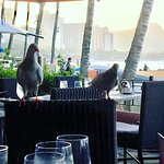 Birds at breakfast with Diamond Head in the background.
