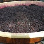Premium Wine Tours by Scott Ninnis - Private Tours
