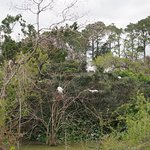 Birds nesting in Ibis Pond