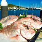 Fresh snapper straight off the boat!