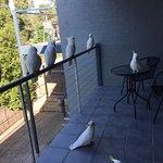 Locals visiting my balcony