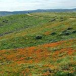 Vallata popolata dai fiori di papavero