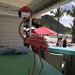 Foto de Pink Flamingo