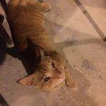 friendly kitty..