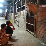 My sons love watching the horses in the stable.