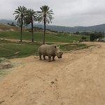 Photo of San Diego Zoo Safari Park