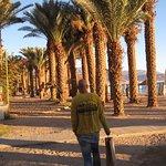 Photo of Eilat Marina