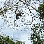 Monkey at Chacchoben