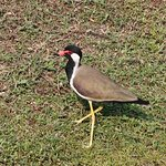 Bird life at Ananthaya
