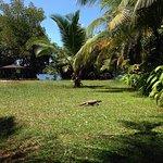 Photo de Mangrove Villa