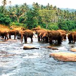 Photo of Pinnawala Elephant Orphanage