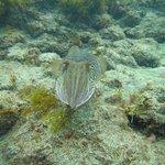 Photo of Davy Jones Diving