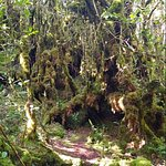 The enchanted Mossy Forest