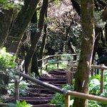 Foto de Parque Nacional de Garajonay