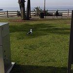 Photo of Santa Monica Bay